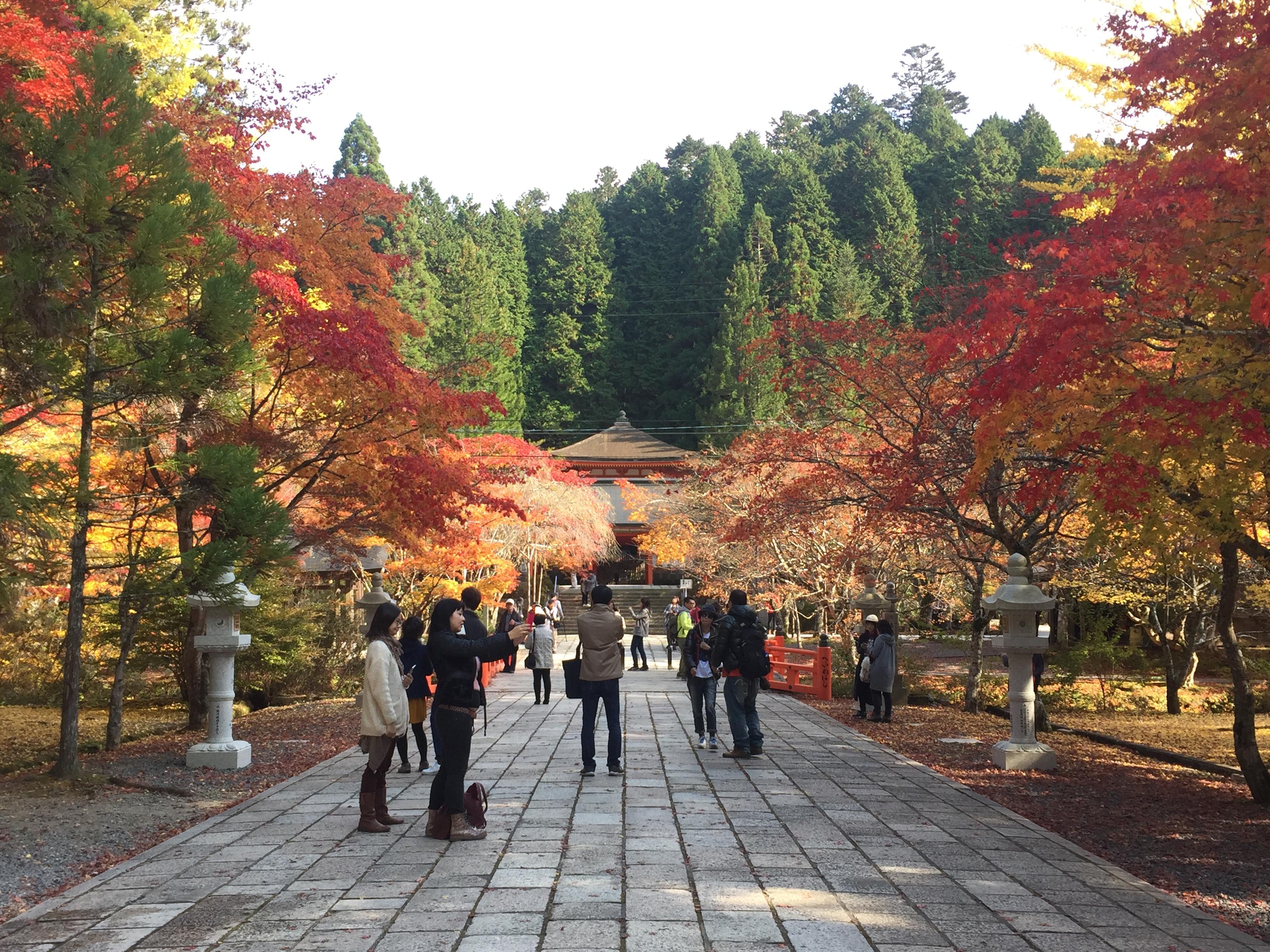 一度は見るべき「高野山・金剛峯寺」の紅葉