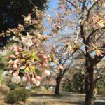 四季折々の花を愛でる余裕を持ちたい