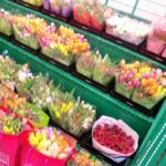 オランダアムステルダムの空港―チューリップの花束