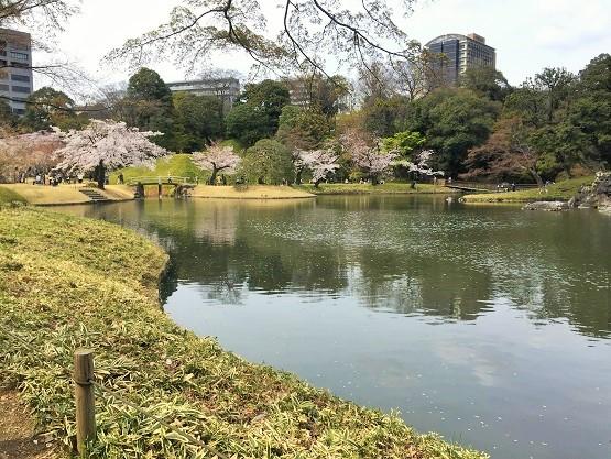 小石川後楽園の桜は見頃を少し過ぎていたけど綺麗でした