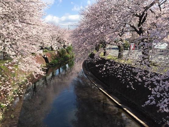 吉原から興津までの22.4kmを歩いた①【東海道を歩く】
