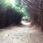 元箱根~三島スカイウォーク休憩所の10.5kmを歩いた②【東海道を歩く】