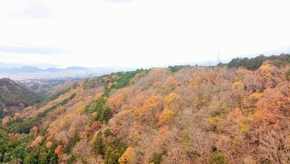 三島スカイウォーク休憩所~三島駅の9.1kmを歩いた①【東海道を歩く】