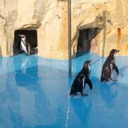 コアラ、パンダ、カンガルーもいる神戸市立王子動物園に長居