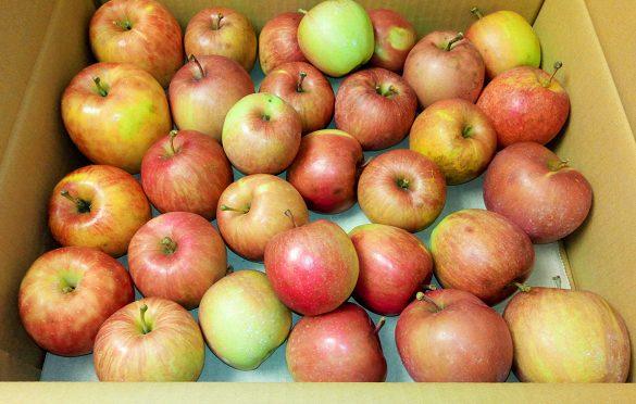 美味しい!無農薬・化学肥料不使用りんご